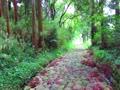 金谷坂の石畳風景と鳥の声